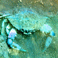 Crab With The Blues by Wayne Potrafka