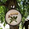 Crabapple Blossoms by Summer Porter