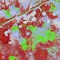 Crabapples Series #4 25 by Gary Bartoloni