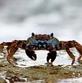 Crabby by David Buhler