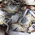 Crabs by Jez C Self