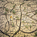 317805-cracked Mud Patterns  by Ed  Cooper Photography