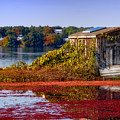 Cranberry Bog Farm II by Gina Cormier