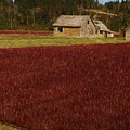Cranberry Bog by Mike Penney