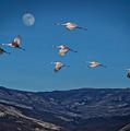 Cranes Across Colorado Blue by Janice Pariza
