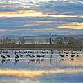 Cranes At Dawn 1 by Diana Douglass
