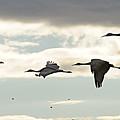 Cranes At Dawn 2 by Diana Douglass
