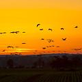Cranes In The Evening by Steffen Krahl