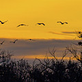 Cranes In The Sunrise by Randy Jackson