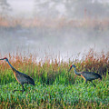 Cranes On Foggy Day by Tom Claud