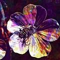Cranesbill Flower Close Bee Insect  by PixBreak Art