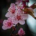Crapabble In The Rain by Ina Kratzsch