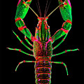 Crawfish In The Dark - Greenred by Baptiste Posters