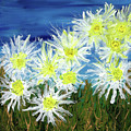 Crazy Daisies by Cindy Johnston