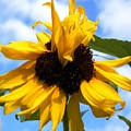 Crazy Sunflower Look by Belinda Lee