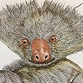 Crazy Two Toed Sloth by Graham Wallwork