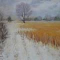 Cream Of Wheat by Julie Mayser