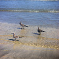 Creatures Of The Gulf - Morning Walk by Lucyna A M Green