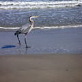 Creatures Of The Gulf - Walk This Way by Lucyna A M Green