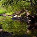 Creek 2 by Dale Gray