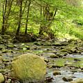 Creek 3 by Dale Gray