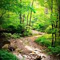 Creek Bend by Tatiana Gorbett