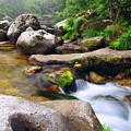 Creek by Carlos Caetano