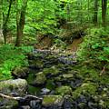 Creek Crossing In Ma by Raymond Salani III