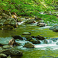 Creek In Great Smoky Mountains National by Panoramic Images