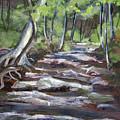 Creek In The Park by Janet Felts