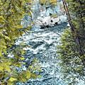 Creek  by Joseph F Safin