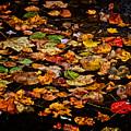 Creek Leaves by Kathi Isserman