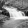 Creek Merge Waterfall In Black And White by James BO  Insogna