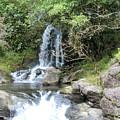 Creek On Kalalaua Trail by Rupali Kumbhani