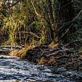 Creek by Thomas Fields