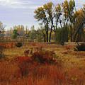 Creek Valley Beauty by Scott Washburn