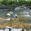 Creekside by Joy Leninsky