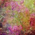 Crepe Garden 1776 Idp_2 by Steven Ward