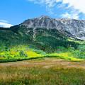 Crested Butte Aspens by Susan Warren