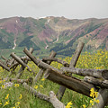 Crested Butte Color by Meagan Watson