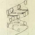 Cricks Original Dna Sketch by Science Source