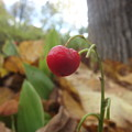 Crimson Berry by Claire Lacroix
