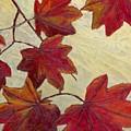 Crimson Branch by Wanda Pepin