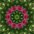 Crimson Clover Kaleidoscope by Robyn Stacey
