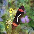 Crimson Longwing Butterfly 8231 Idp_2 by Steven Ward