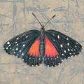 Crimson Patch Butterfly by Mindy Lighthipe
