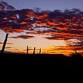 Crimson Sunrise  by Rudy Gallegos