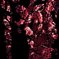 Crimson by Tim Richards