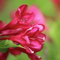 Crimson by Walter Stankiewicz