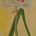 Crinum Bulbispermum  by Marinella Owens